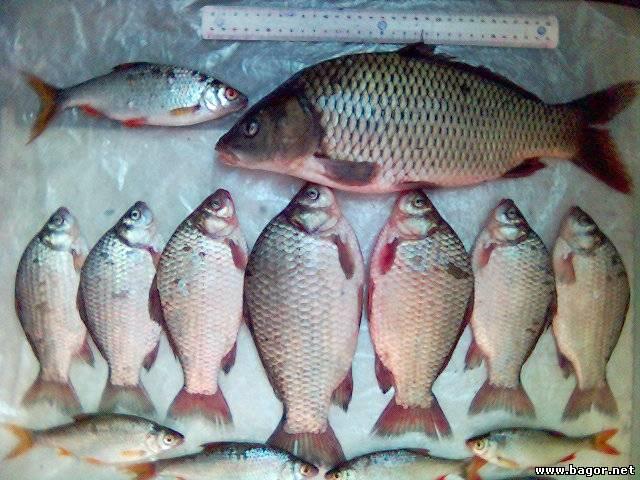 рыбалка на брестской области сверху карася видео