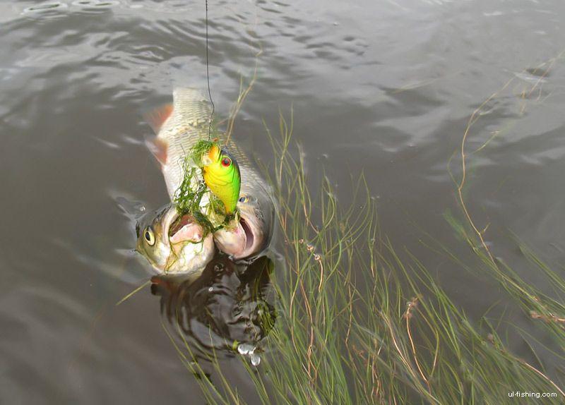 на что лучше клюет рыба видео